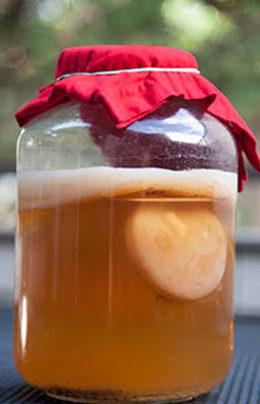 hongo de kombucha en envase